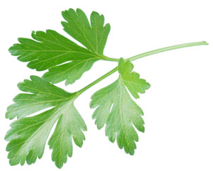 history of parsley