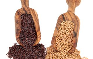 Difference between yellow and brown mustard seeds